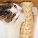 Scratching-Post-For-Kittens square