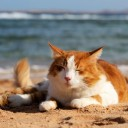holiday cat beach square cropped