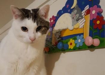 Kattenhotel beestjes